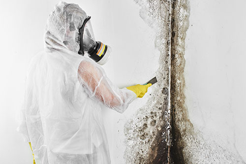 Mold Remediation Contrator Insurance
