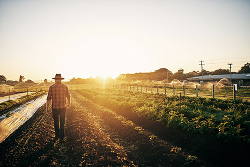 farm insurance Mississippi